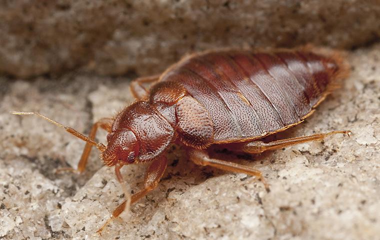 Bed Bug Control Pest Management In Alexandria Va