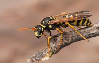 wasp on branch