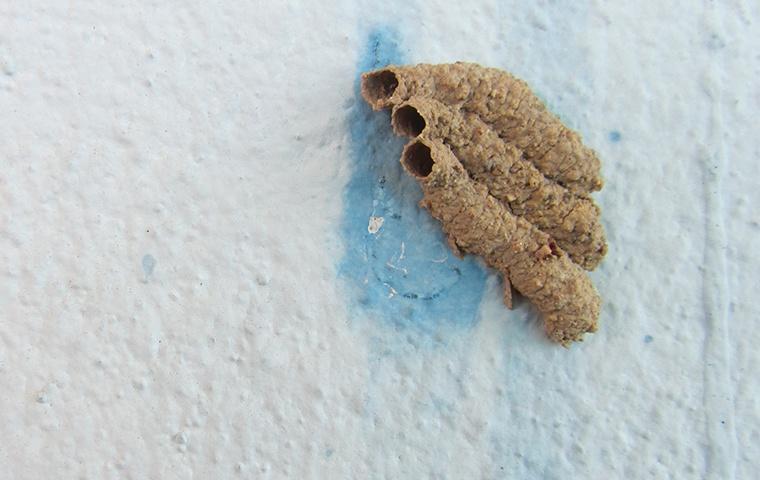 mud dauber tubes on wall inside home