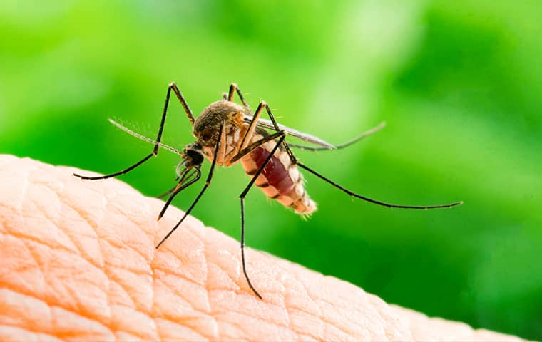 a mosquito biting a human hand outside in houston texas