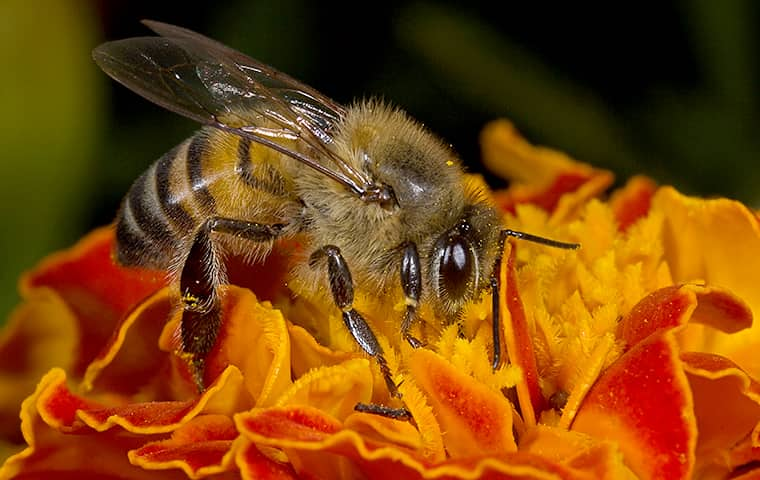 Honey Bees An Important Role For Plant