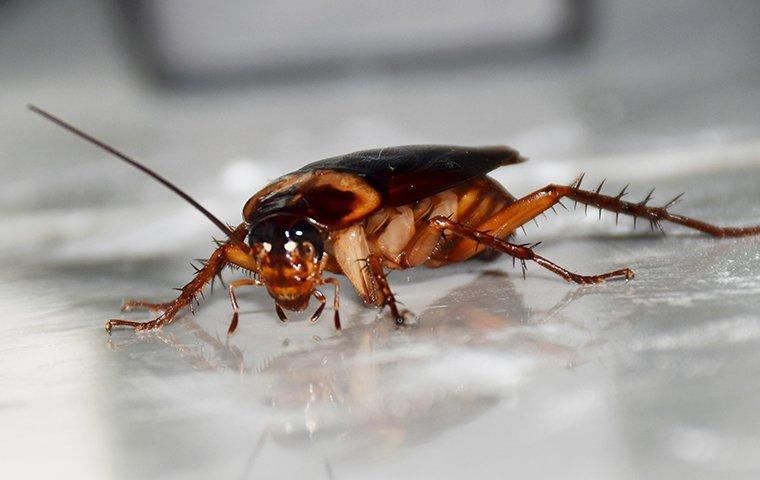 a cockroach on white surface