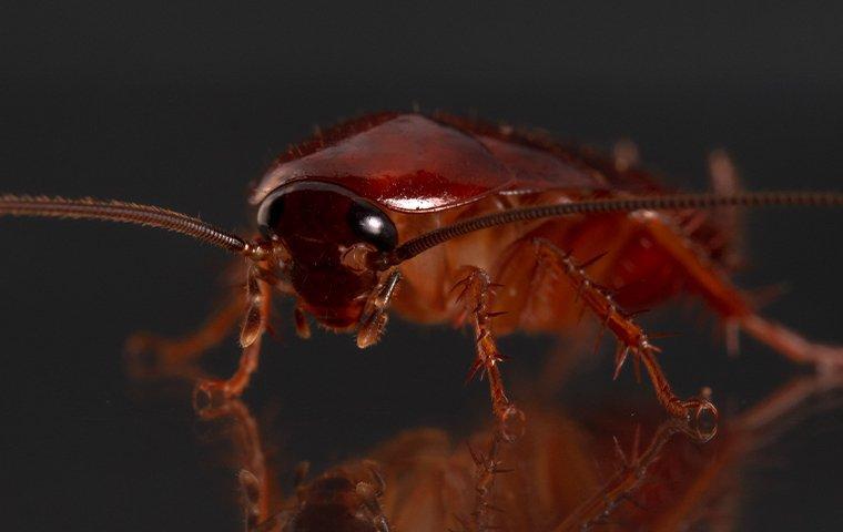 cockroach on glass