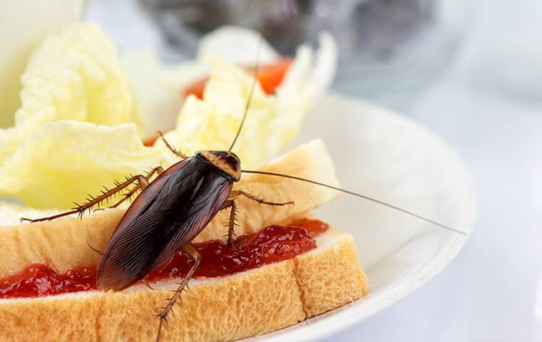 a cockroach crawling on a sandwich inside of a home in fort worth texas