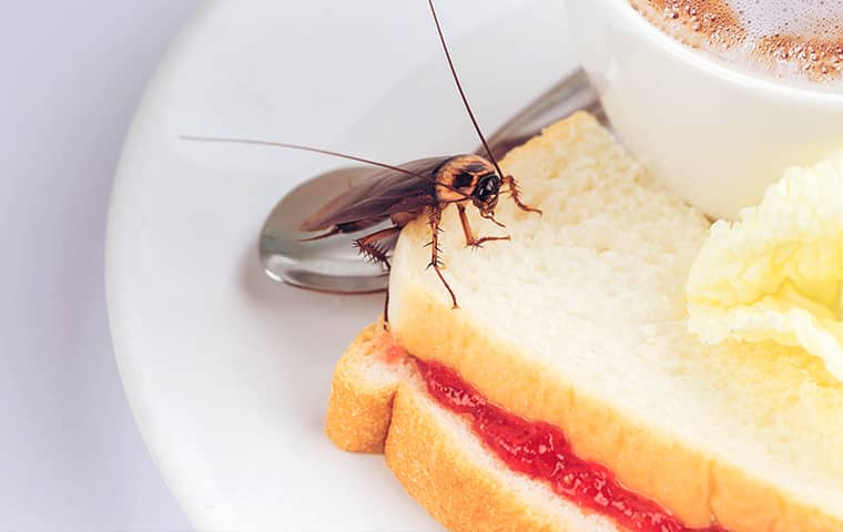 a cockroach on a plate of food inside of a home in dallas texas