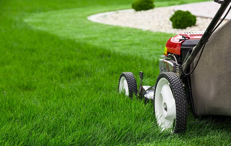 professional lawn care outside of a home in texas