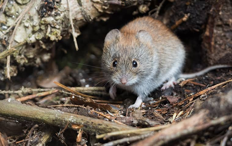a vole in a hole in houston texas
