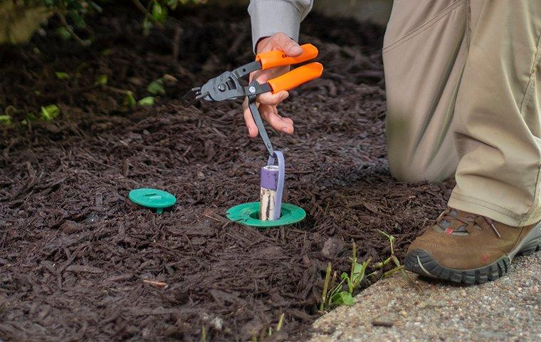a cantu pest and termite service technician installing a termite bait station in the ground outside of a home in dallas texas
