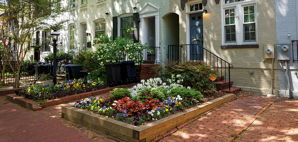 beautiful flowers outside a home in Washington, D.C.