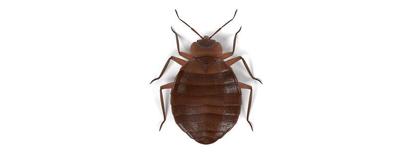 a bed bug in clifton virginia