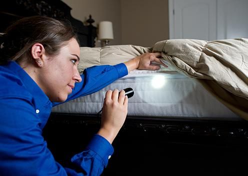 a service technician performing a bed bug inspection on a bed in dumfries virginia