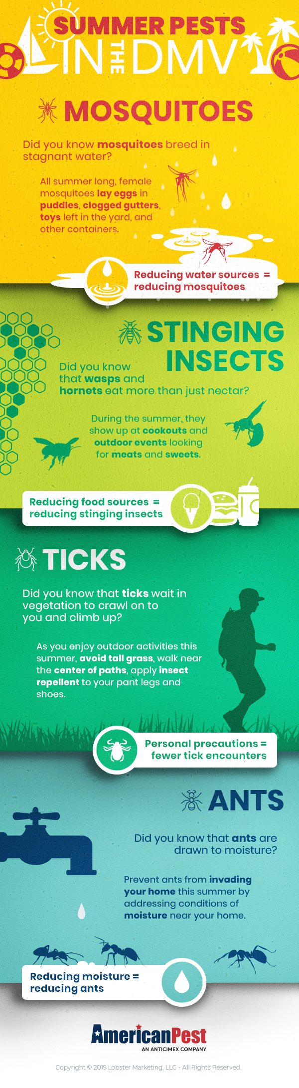 Summer Pests In The DMV Infographic