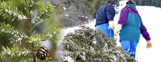 family dragging christmas tree out of the woods