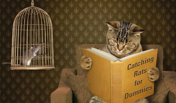 cat reading book with rat on cage