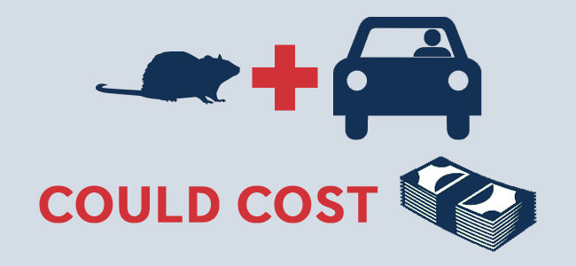 rodent damage in cars costs money