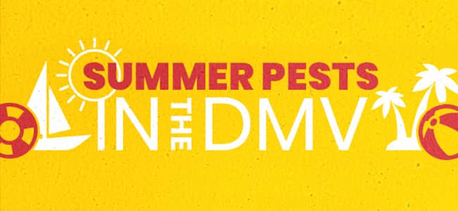 summer pests in the dmv banner