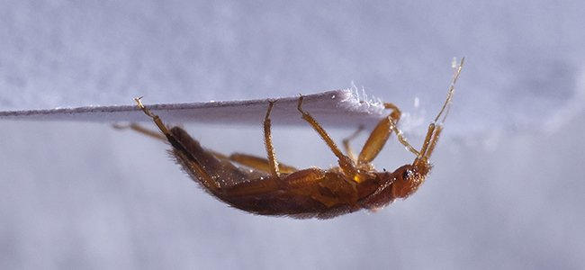 a bed bug crawling on paper