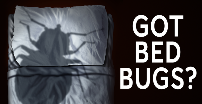 get rid of bed bugs in bed graphic