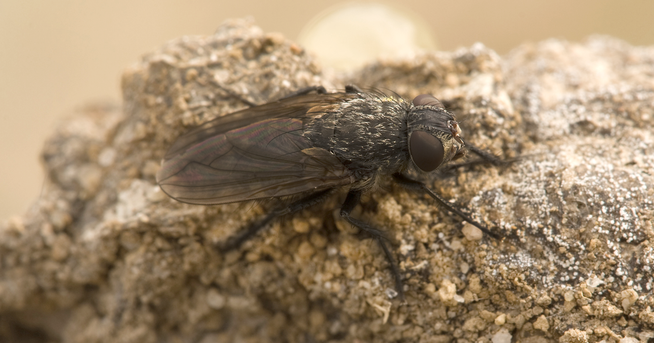 how to get rid of cluster flies in maryland