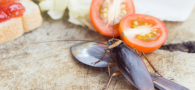 a cockroach on food in a kitchen in fulton maryland