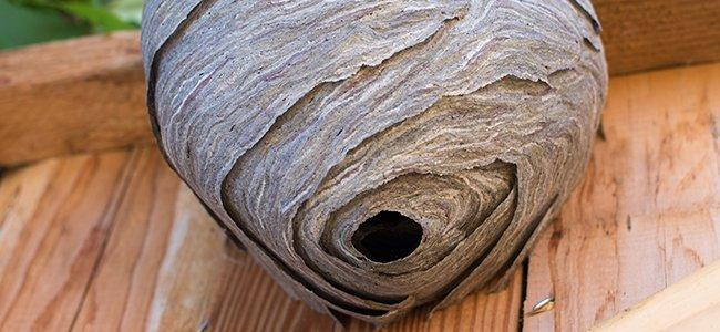a hornets nest under the porch roof of a home