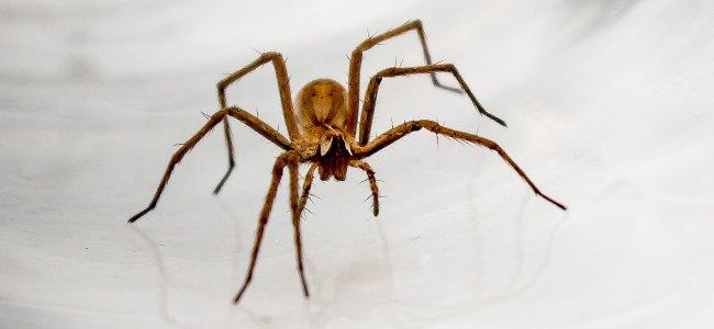 spider on white floor