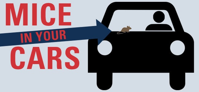 mice in cars illustration