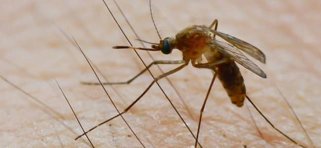 mosquito on maryland resident