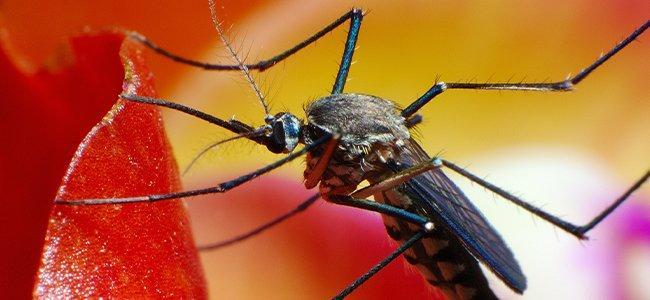 mosquitoe outside
