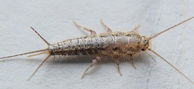close up  of silverfish on paper