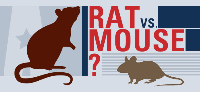 mice or rats infographic from american pest