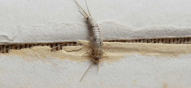 silverfish prevention in maryland home