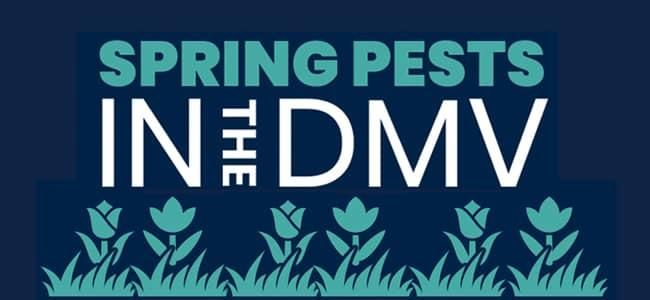 spring-pests-in-the-dmv