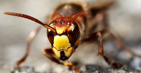 a hornet up close outside of a home in arnold maryland