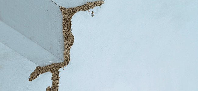 termite damage in maryland