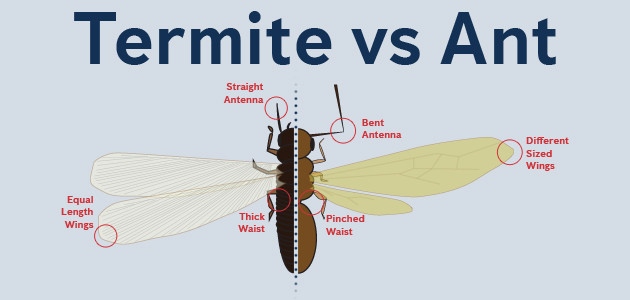 swarming termites and flying ants in maryland dc and virginia