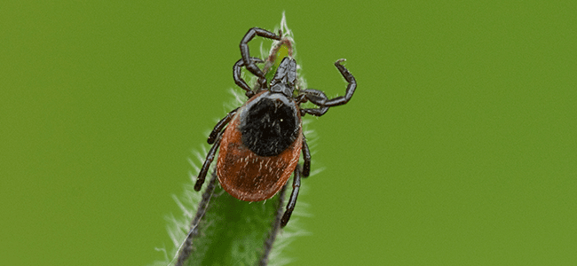 tick near maryland home