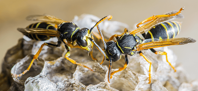 wasps up close