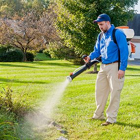 commercial mosquito control tech in maryland treats landscaping