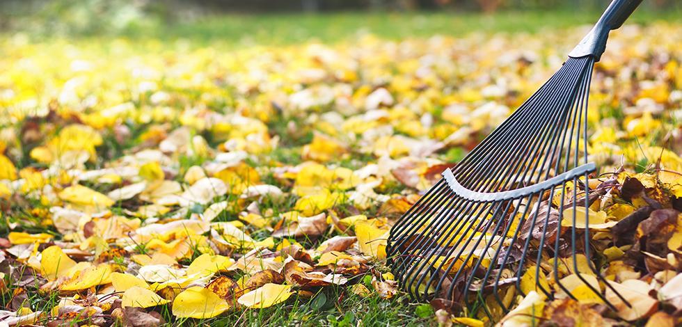 a person raking leaves in washington dc