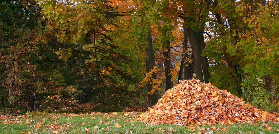 a pile of leaves in a yard in burke virginia