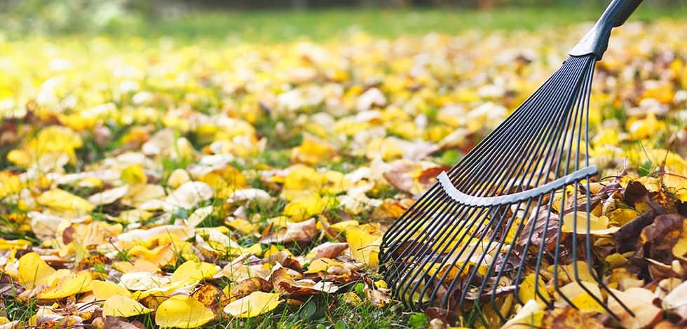 a person raking leaves away from their fairfax virginia home