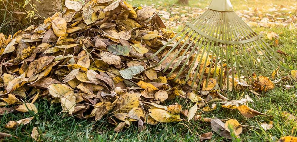 raking leaves in maryland