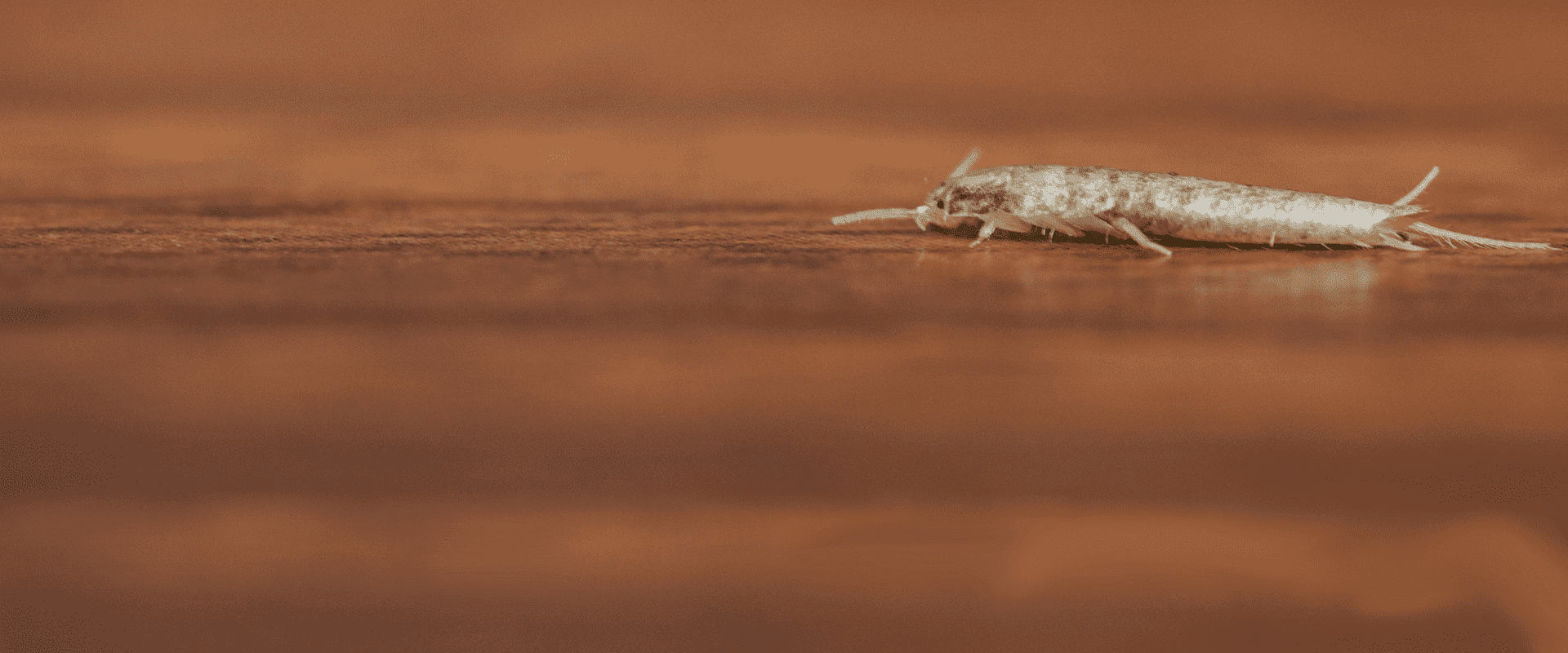 baltimore home infested with silverfish