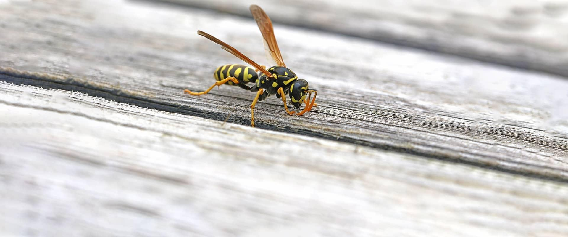 a wasp crawling on porch in cheverly maryland