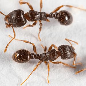 ants in md, va & dc