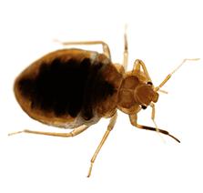 termite on a white background