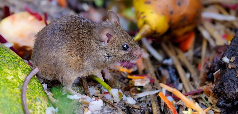 a mouse outside a home in clarksville maryland