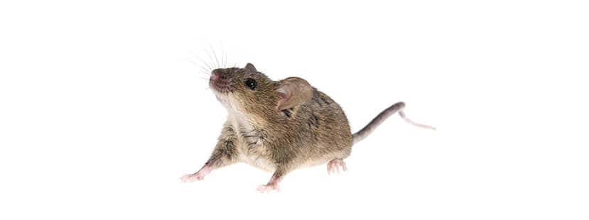 a mouse in district heights maryland