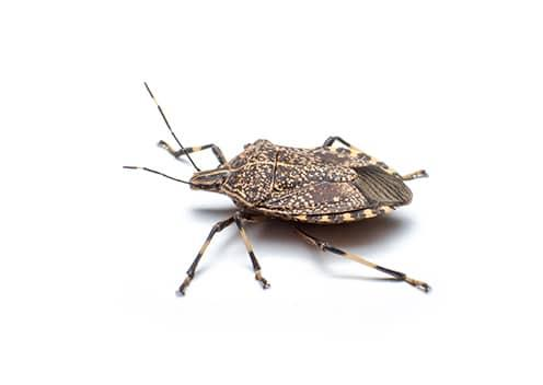what nuisance pests look like